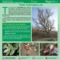 Font Fontanelles